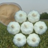 New crop! normal white garlic price