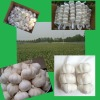 Chinese Fresh Pure White Garlic