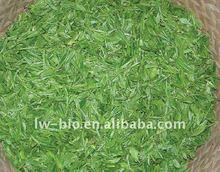 High quality green tea extract 99% EGCG