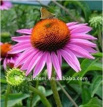high purity Echinacea Extract