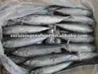 Frozen whole round yellow fin, big eye tuna and bonito for canning