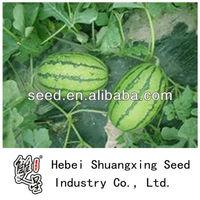 Jade oval shape hybrid watermelon seed for sale