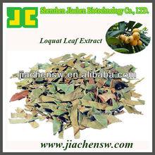 Loquat Leaf extract 5:1,10:1
