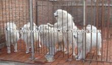 welded wire dog kennels manufacturer