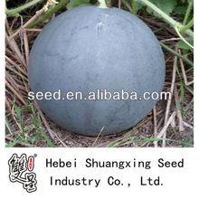 Black King watermelon hybrid seed
