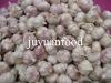 Chinese Juyuan Garlic