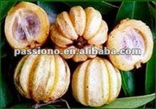 Garcinia cambogia P.E.50%,60%(Hydroxycitric Acid)/ plant extract