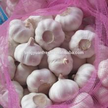 new crop natural garlic