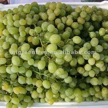 fresh grapes Victoria