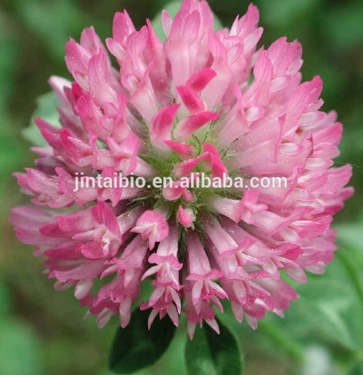 manufacturer supply 2.5% 8% 20% 40% red clover extract