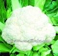 Desidratado couve-flor - ar livre produtoshortícolas