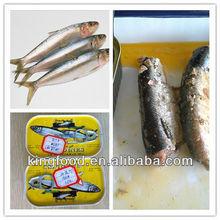 2012 hot selling frozen sardine