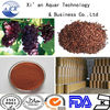 Organic Grape Seed Extract,Natural Grape Seed ExtractPowder,Grape Seed Extract Proanthocyanidin Grape Seed ExtractPowder