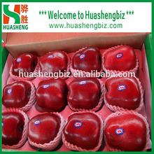 China fresh top red huaniu apples