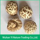 China Dried Shiitake Mushroom Cultivation