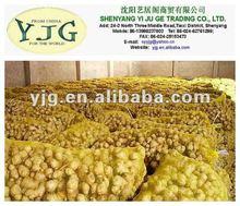 2014 new season China fresh ginger