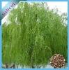 100% Natural Salix alba L.Salicin
