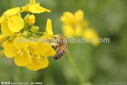 New rape flower honey