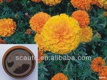 Marigold Health Foods Lutein