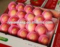 2014 exportación red delicious fruta fresca de apple con haccp, Iso, Global GAP