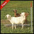 Fina de metal porco cerca pannel / Animal reprodução fence ( profwssional fábrica )