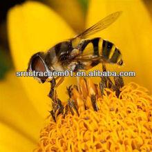 Hot Sale Mixed Bee Pollen