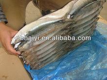 new arrival seafrozen mackerel 2012