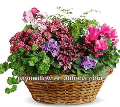 Rieten hangmanden voor planten