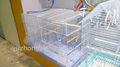 Gaiola de pássaro pequeno aramefarpado( anping fábrica)