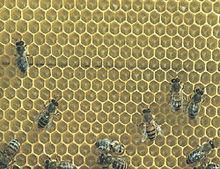 100% natural Bee Propolis (powder/liquid)
