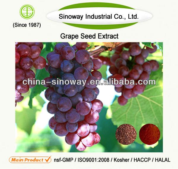 Organic Grape Seed Extract,Natural Grape Seed Extract Powder,Grape Seed Extract Proanthocyanidin