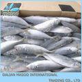 Congelados de pescado, la caballa, el arenque y otros peces