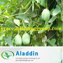 One hundred percent good quality Herba aristolochiae Extract
