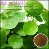 Gotu Kola Extract,Centella Asiatica Extract,Asiaticoside