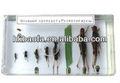 a vida de gafanhotos espécime