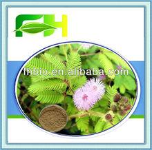 100% Natural Mimosa Hostilis P.E./Mimosa Tenuiflora Extract