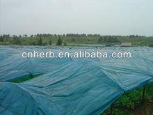 100% Natural dried Ginseng root