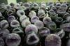 Energy Natural Quartz Crystal Ball Geodes/Amethyst Crystal Ball Geodes Wholesale