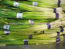 2013 new crop fresh garlic sprout