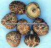 Hight quality Log Dried Mushroom