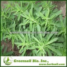 2014 Natural Sweetner Stevia P.E/Stevioside 80%,90%,95% at lowest price
