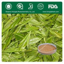 Organic Geen Tea Extract,Tea Polyphenol 90%