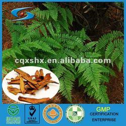 Rhizoma Drynariae(Gu Sui Bu) Chinese Herb Medicine