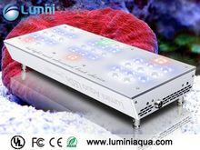 lumini Aqua aquarium corals sale