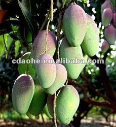 mango amino acid chelate calcium boron fertilizer