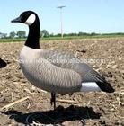 Lifelike Decoys for duck hunting/Plastic duck decoy/Duck Decoy