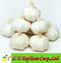 fresh garlic of 2014