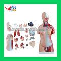 45cm, unisex modelo de torso de peças, modelo do corpo humano
