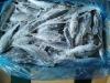Horse Mackerel fish seafood