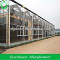 gewächshäuser venlo glas für die landwirtschaft nutzen
